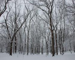 Horticulture Park - Woodland Snow