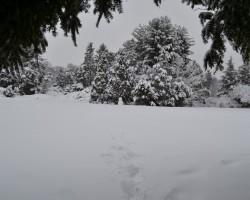 Horticulture Park - Snowman Guardian