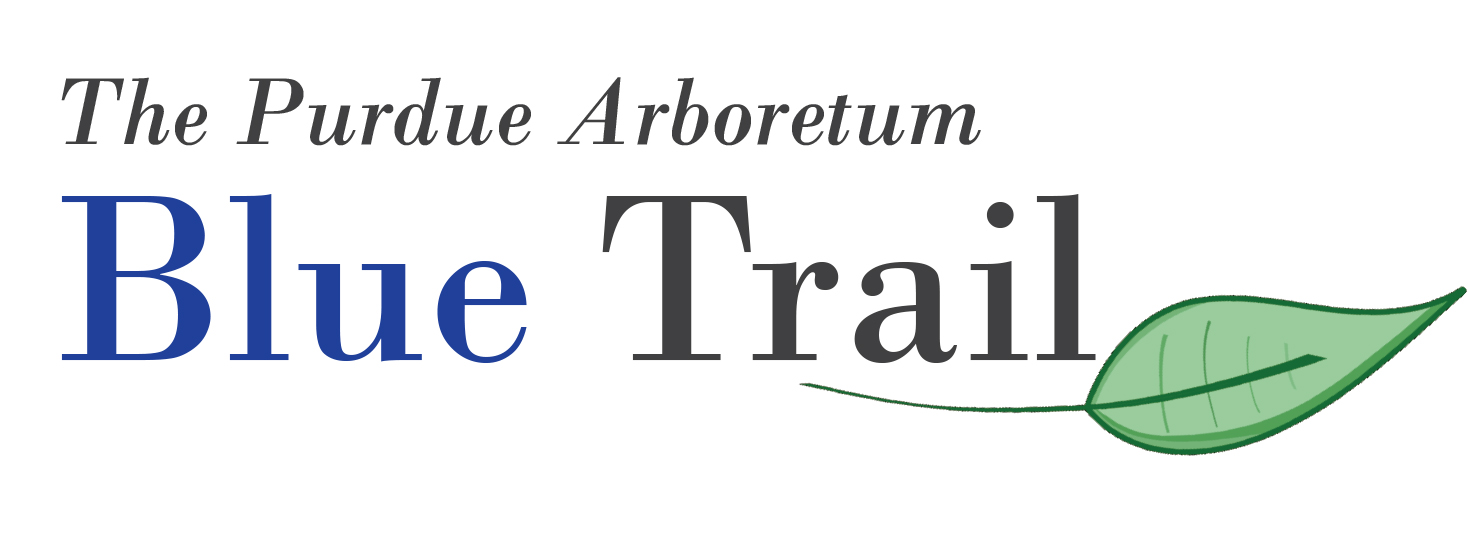 Blue Tree Trail Logo