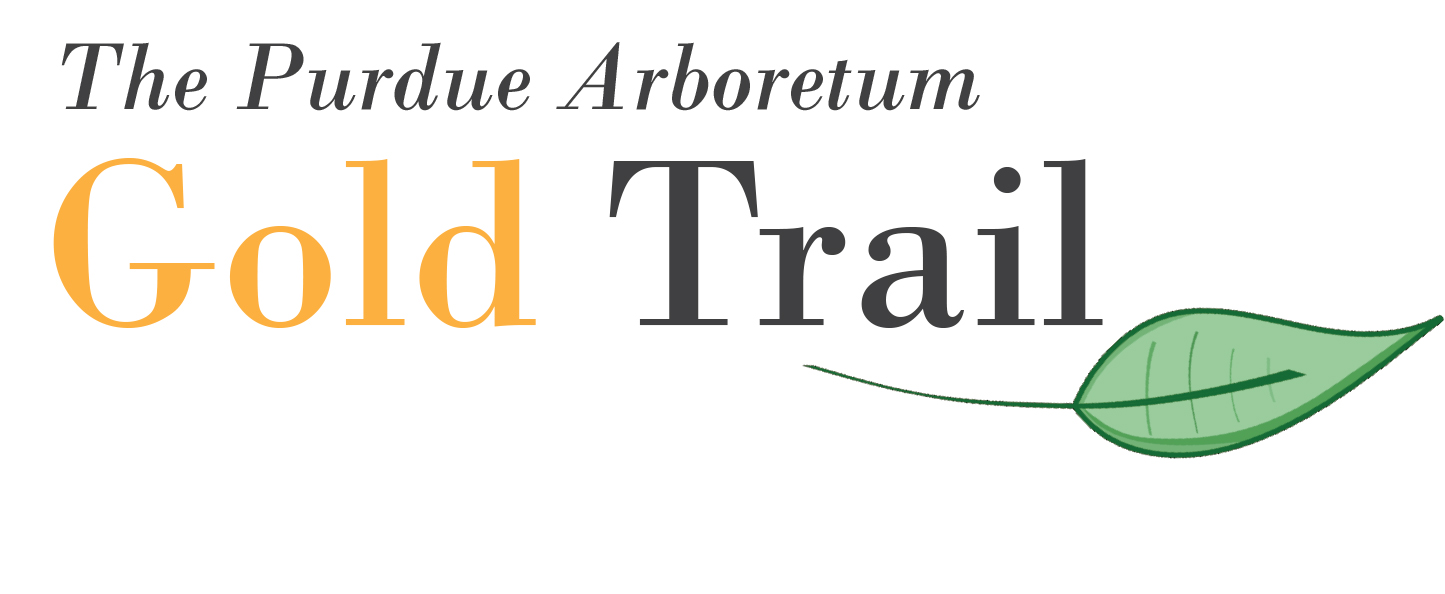 Gold Tree Trail Logo