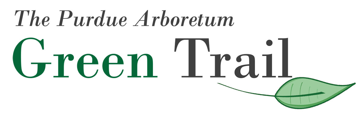 Green Tree Trail Logo