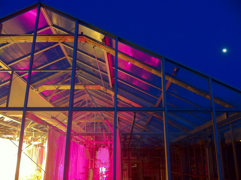 Greenhouse-Pics-IMG_2262