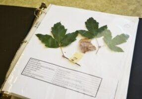 Plant ID Book