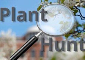 planthunt